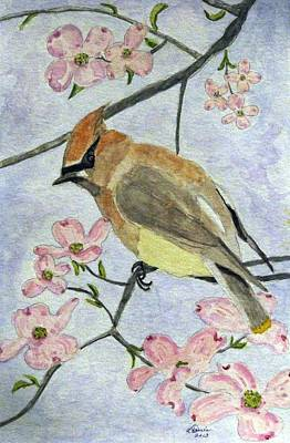 A Waxwing In The Dogwood Art Print