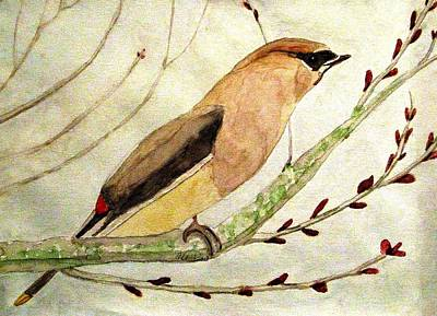A Waxwing In The Orchard Art Print