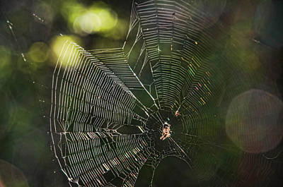 Photograph - A Web Of Her Own by Beth Sawickie