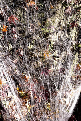 Photograph - Web Of Leaves by Kellice Swaggerty
