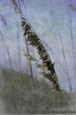 Photograph - A Whisper In The Wind by Judy Hall-Folde