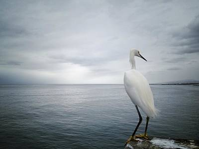 Photograph - A White Egret Watching The Ocean by Shari Weaver Photography
