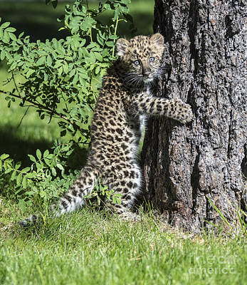 Spotted Tail Photograph - A Whole New World by Sandra Bronstein