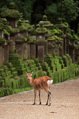 Shinto Temple Photograph - A Wild Deer Stands Next To A Long Line by Paul Dymond