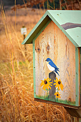 A Winter Bluebird Art Print by Soul Full Sanctuary Photography