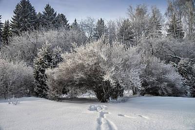 Photograph - A Winter Day 2 by Vladimir Kholostykh