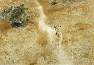 Wildlife Landscape Painting - A Winter Hare In A Landscape by Bruno Andreas Liljefors