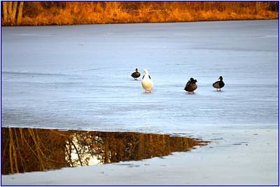Discount Codes Photograph - A Winter Lake by Sonali Gangane