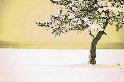 A Winter Moment Art Print by Karol Livote
