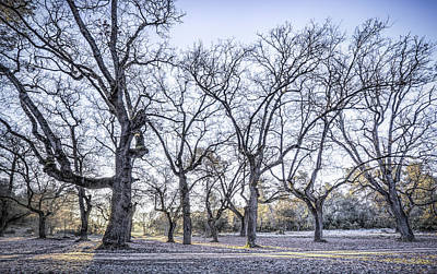 Hdr Photograph - A Winter Morning by Marc Garrido