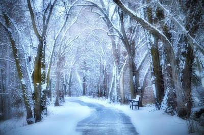 Photograph - A Winter Resting Place by Tara Turner