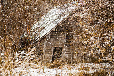 Photograph - A Winter Shed by Edward Peterson
