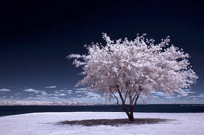 Photograph - A Winter Summer by Mike Irwin