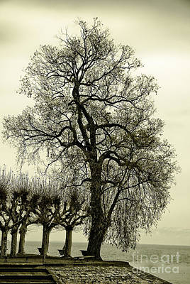 A Winter Touch Art Print by Syed Aqueel