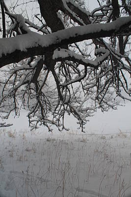 Photograph - A Winter Tree View by Alicia Knust