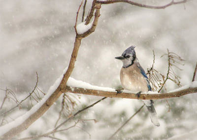 Bluejay Digital Art - A Winter's Day by Lori Deiter