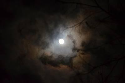 Photograph - A Winter's Moon 2015 by Maria Urso