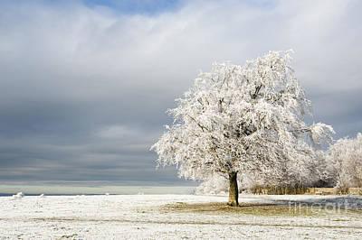A Winter's Morning Art Print by Anne Gilbert