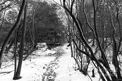 Photograph - A Winter's Path Mono by John Rizzuto