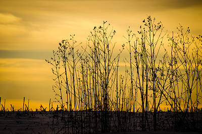 Photograph - A Winter's Silhouette by Christi Kraft