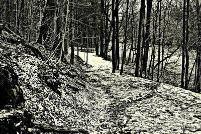 Photograph - A Winter's Trail by Tami Quigley