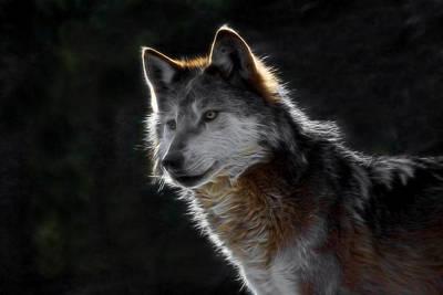 Mexican Wolf Digital Art - A Wolf Digital Art by Ernie Echols