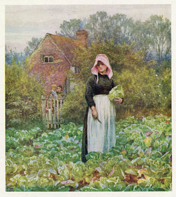Cabbage Drawing - A Woman Cutting Cabbages by Mary Evans Picture Library