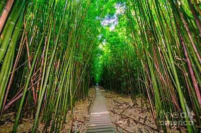 Photograph - A Wooden Path Through A Dense Bamboo Forest Maui Hawaii Usa by Don Landwehrle