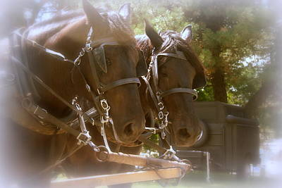 Photograph - A Working Team Of Horses by Kay Novy