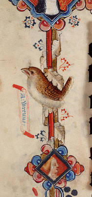 A Wren Art Print by British Library