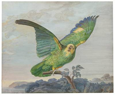 Amazon Parrot Painting - A Yellow-headed Amazon Parrot  by Celestial Images