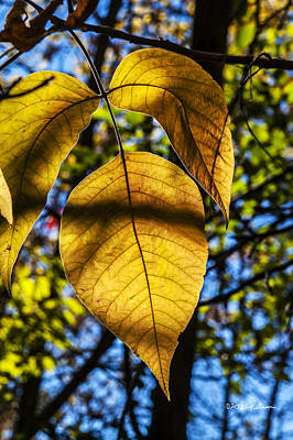 Photograph - A Yellow Leaf by Edward Peterson