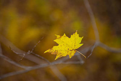 Of Autumn Photograph - A Yellow One by Karol Livote