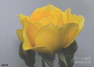 Photograph - A Yellow Rose by Wanda Krack