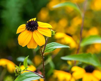 Macro Photograph - A Yellow World 2 by Steve Harrington
