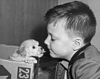 Pet Care Photograph - A Young Boy Is Face To Face With A Puppy Tongue. by Underwood Archives