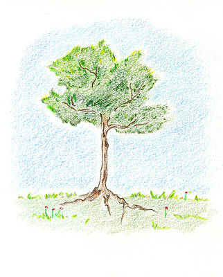 Art Print featuring the drawing A Young Tree by Keiko Katsuta
