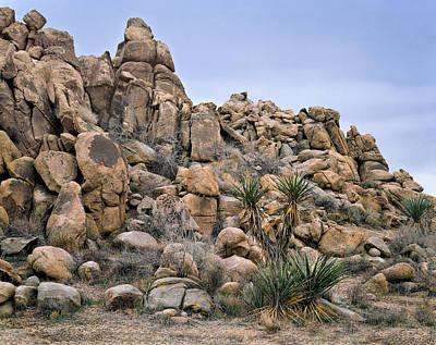Photograph - A Yucca Morning by Paul Breitkreuz