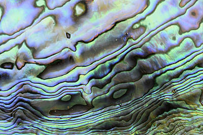 Iridescent Photograph - Abalone Shell Rainbow by Malcolm Schuyl
