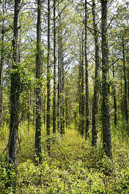 Realistic Photograph - Abandoned Forest In Scott Arkansas by Brett Pfister