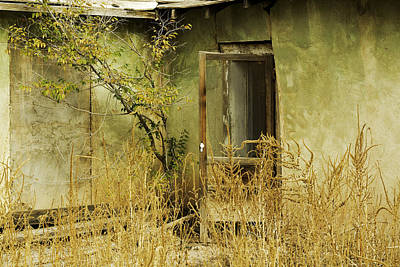 Abandoned Green House-002 Art Print by David Allen Pierson