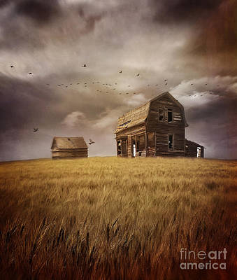 Photograph - Abandoned House On The Prairies In A Field Of Wheat by Sandra Cunningham