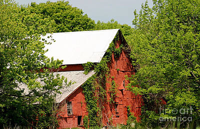 Photograph - Abandoned Old Barn by Living Color Photography Lorraine Lynch