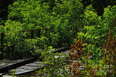 Photograph - Abandoned Railroad by William Norton