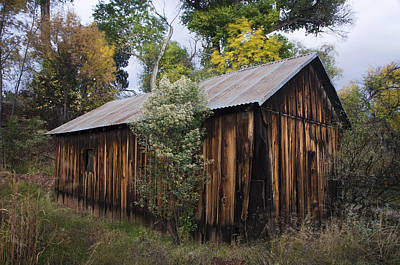 Photograph - Abandoned Wood Building With Fall Colors by Dave Dilli