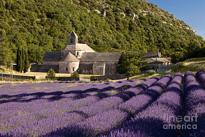 Back To School For Guys - Abbaye de Senanque II by Brian Jannsen