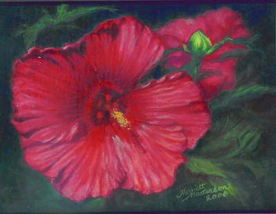 Painting - Abby Rose's Mallow by Harriett Masterson