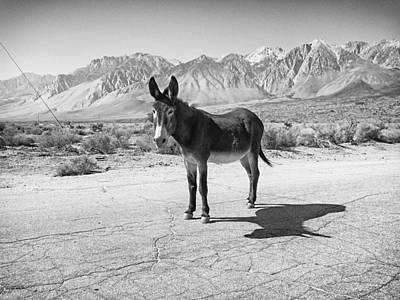 Aberdeen Donkey Art Print