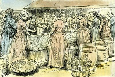 Herring Drawing - Aberdeen Uk Herring Cleaners At Work 1885 by English School