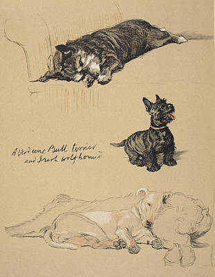 Scottish Dog Drawing - Aberdeens, Bull Terrier And Irish by Cecil Charles Windsor Aldin